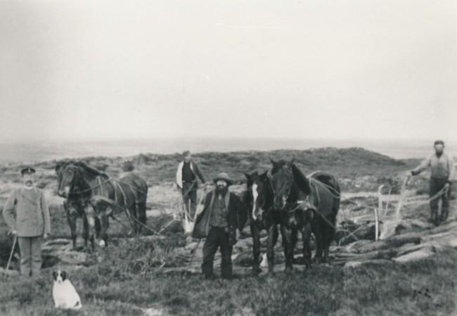 Heden pløjes op med hesteplove.